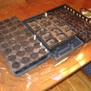 seeds in trays