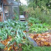linda yard mulch2 web fmt
