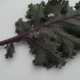 kale leaf with aphids