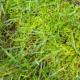 moss in lawn