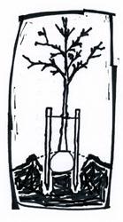 tree planted139x250