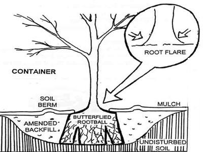 Tree flare diagram
