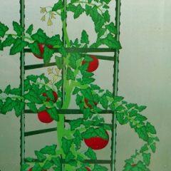 Tomato Ladder - web