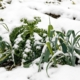 Winter veg bed