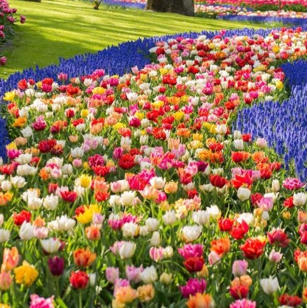 Keukenhof gardens Netherlands sq