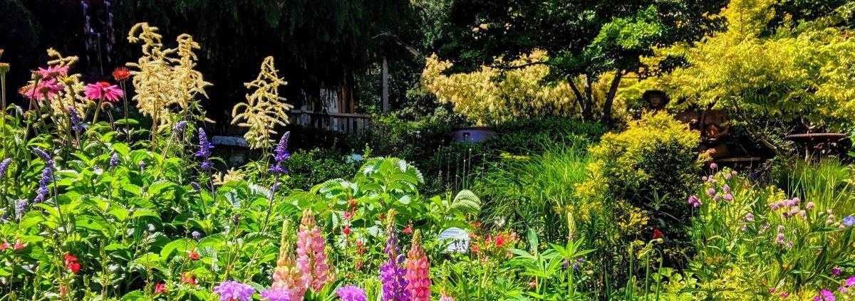 Perennials at RN June