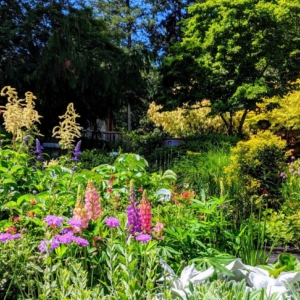 Perennials at RN June