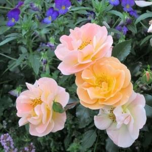 Amber Flower Carpet 1 AT