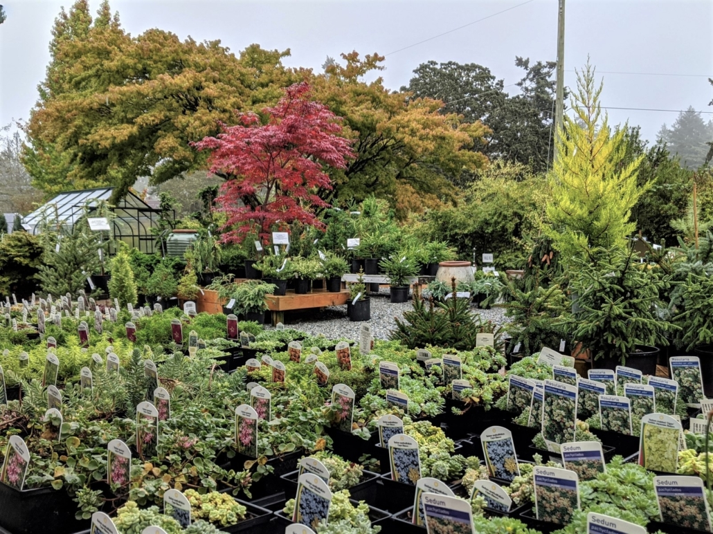 Russell Nursery Conifers fall 2b