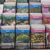 Westcoast seeds scaled