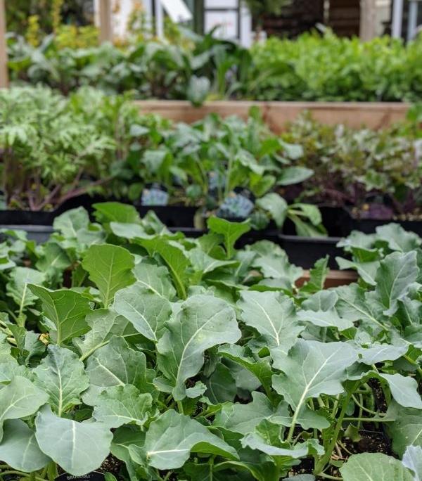 Veggie starts April 2021